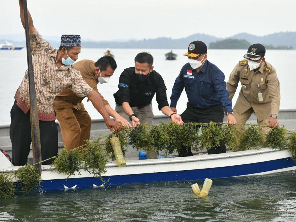 Mengembangkan Bisnis Budidaya Rumput Laut di Karimun