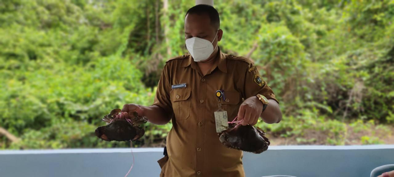Melimpah Ruah Budidaya Kepiting di Desa Sawang Laut